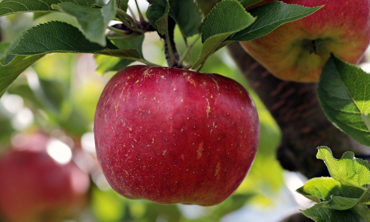 Rezept für Kirsch-Apfel-Marmelade