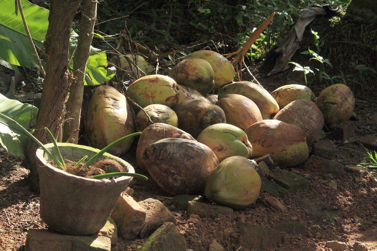 Kokos-Kirsch-Marmelade einkochen