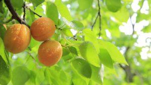 Erdbeer-Aprikosen-Marmelade selber machen
