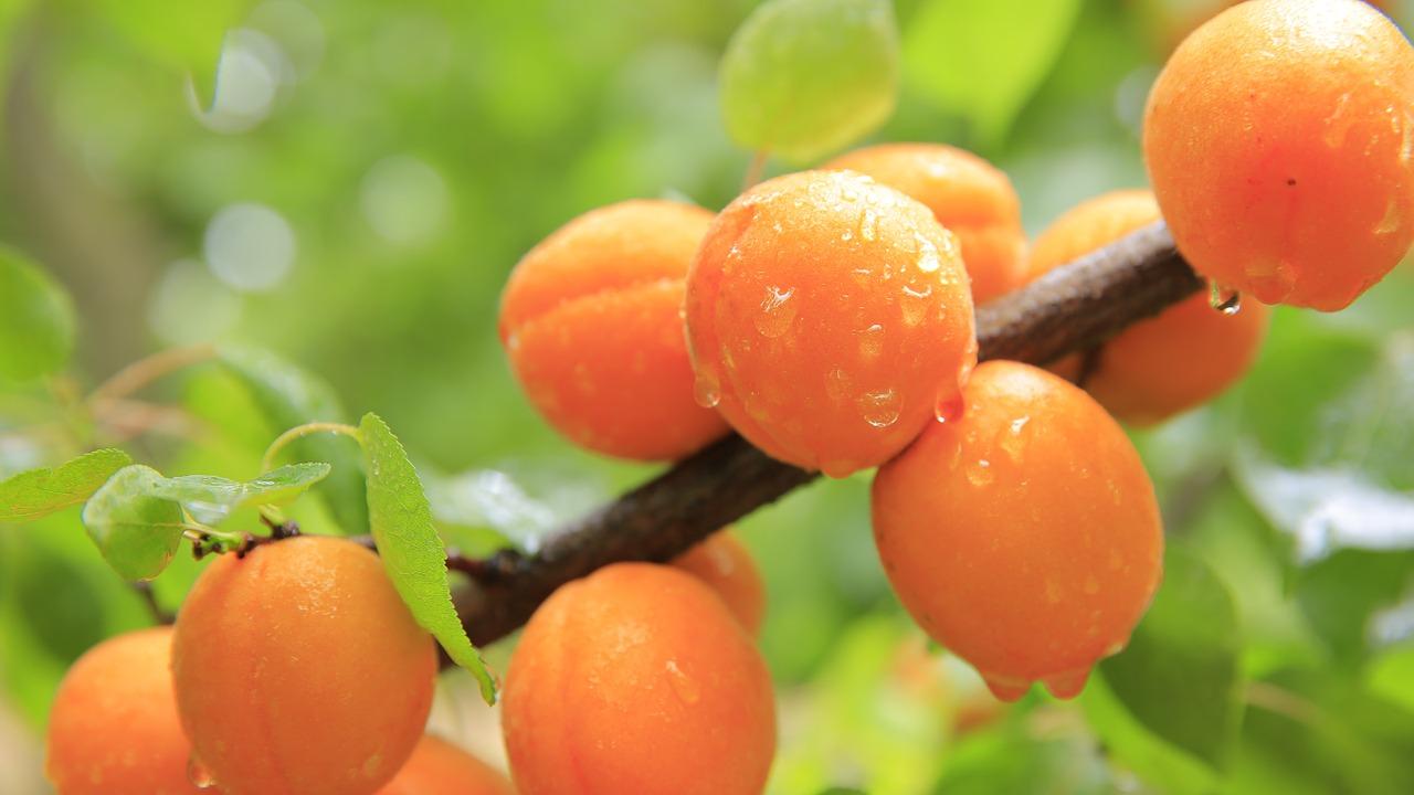 Pfirsichmarmelade einkochen auf traditioneller Art