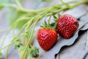 Selber Pfirsich-Erdbeer-Marmelade einkochen