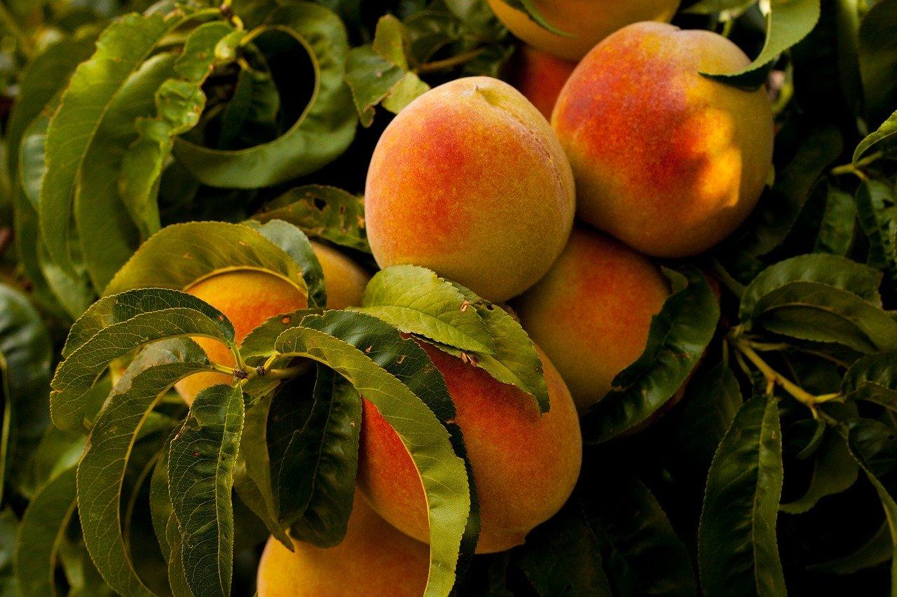 Pfirsich-Erdbeer-Marmelade selber machen
