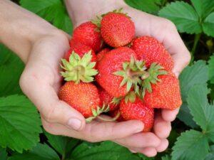 Erdbeer-Orangen-Marmelade selber machen