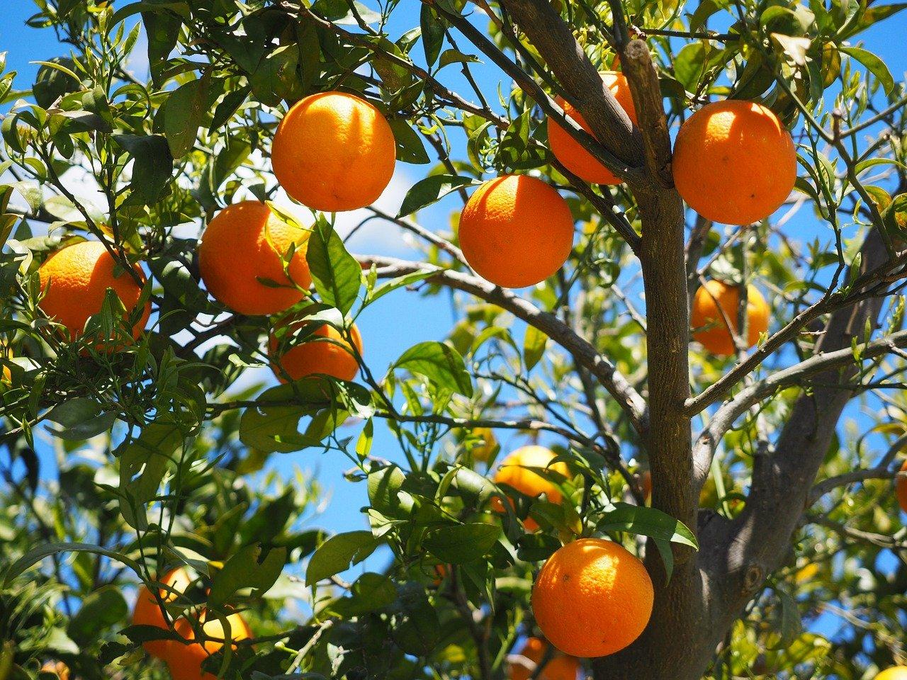 Erdbeer-Orangen-Marmelade einkochen